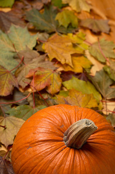 leaves and pumpkins
